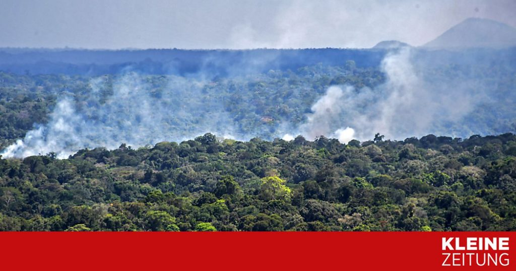 The Amazon rainforest emits more carbon dioxide than it absorbs «kleinezeitung.at