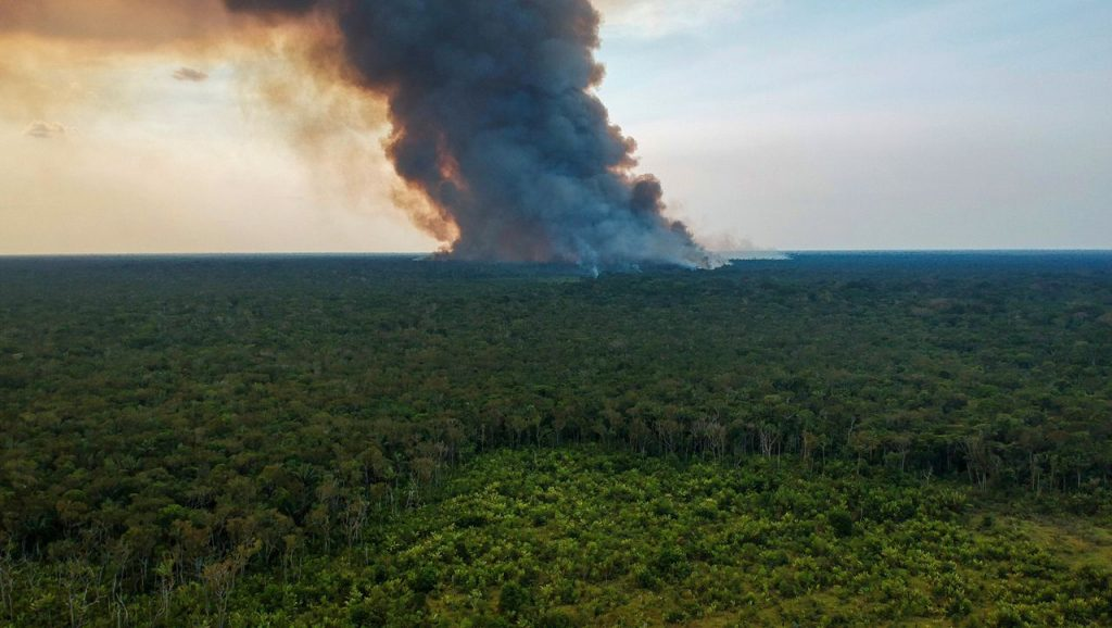 Climate: Deforestation in the Amazon rainforest has reached record levels